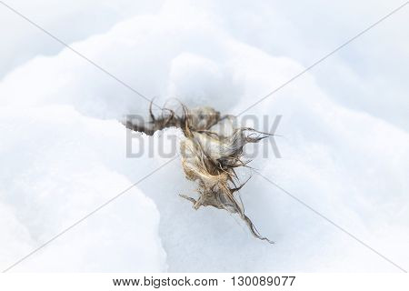 A view of a rabbit carrion in snow.