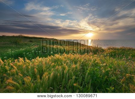 Sundown landscape composition. Sky, sea, and green grass.