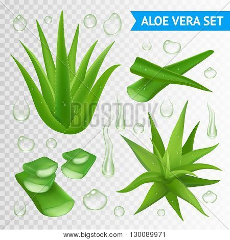 Aloe vera medicinal plant leaves cuttings and juice drops elements collection on transparent background realistic vector illustration