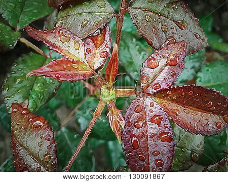 Illustration of rose flower leaves with drops of water after rain