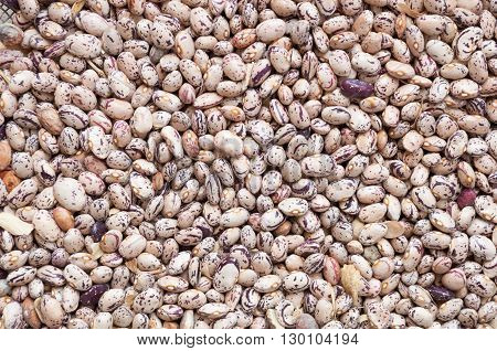 Group of red beans arranged for drying. Legume species