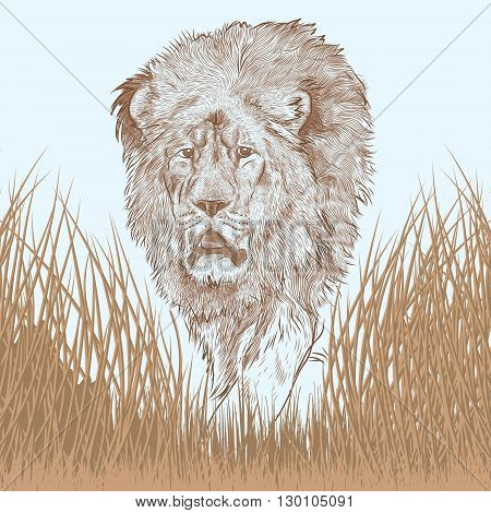 very detailed portait of a great lion walking in savanna