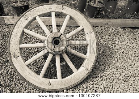 one isolated old big wooden wheel with spokes for the ancient cart closeup and a blank space