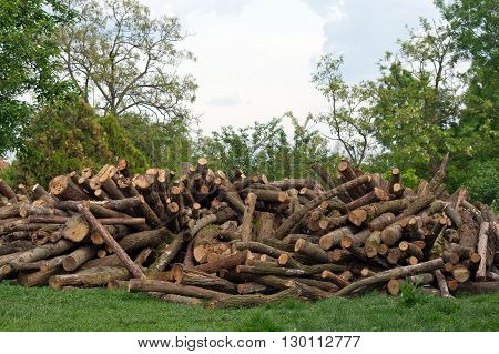 Firewood pile in the woods waiting for shipment.