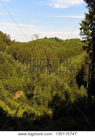 Green landscape near Kokorin castle in spring time