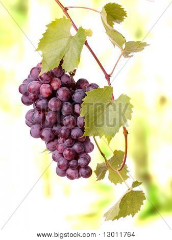Red Grape Cluster mit Blättern