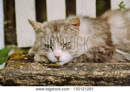 Lazy domestic grey cat lying on the bench and looking at the left