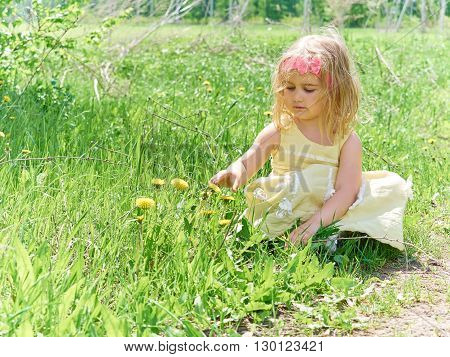 Girl Sitting On Grass With Flowers Dandelion.