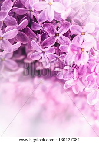 Lilac. Purple Lilac. Bouquet of purple lilacs. Beautiful flowers of lilac - close up. Valentines Wedding Romantic floral background with violet  lilac flowers and bokeh. Toned Photo.