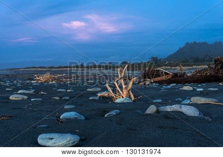 Driftwood on black volcanic sand on sunset. Unusual surreal landscape of beach. New Zealand. Copy space selective focus