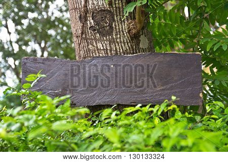 blank wood sign board on the tree
