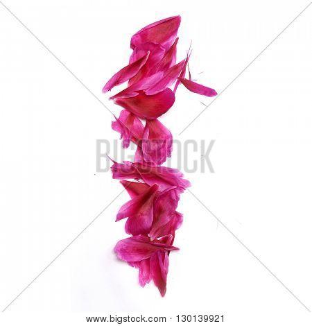 Peon petals digits. Digit 1
