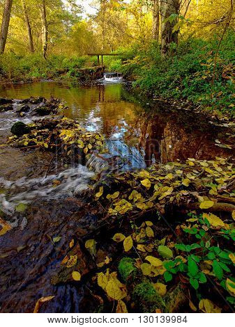 Autumn in natural park Bobrava near town Brno Czech republic creek trees with colored foliage the fallen colored leaves deserted