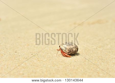 hermit crab on the beach in summer.