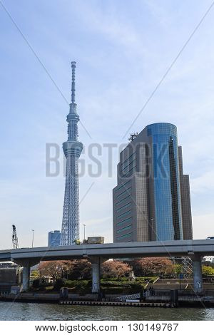Tokyo Japan - April 9 2016: View of Tokyo Sky Tree (634m) the highest free-standing structure in Japan.