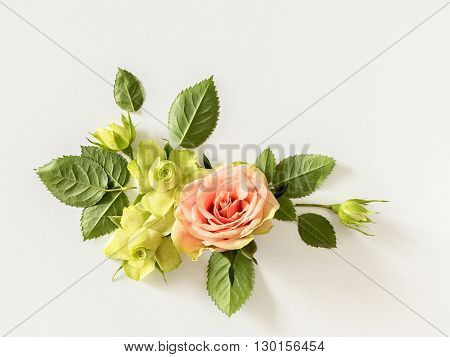 Roses and leaves on white background. Overhead view, flat lay.
