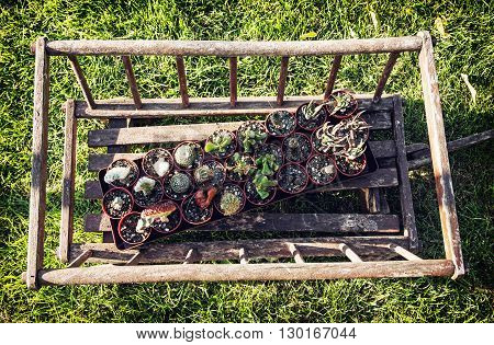 Old decorative wooden cart with various planted cacti in the garden. Gardening theme. Green lawn. Various succulent.