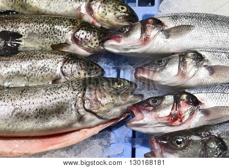 trouts and sea basses on ice. Variation of fresh fish on a fish market stall.