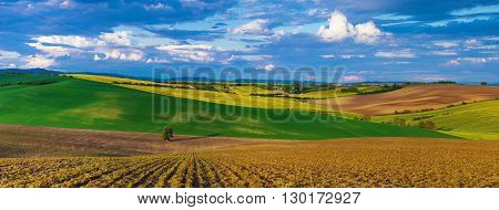 Rapeseed yellow fields in spring with blue sky and green hills,  natural eco seasonal  background, panorama