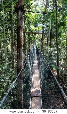 Canopy bridge walk in the Taman Negara national park, Malaysia