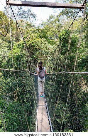 Woman on the canopy bridge walk in the Taman Negara Nationalpark, Malaysia