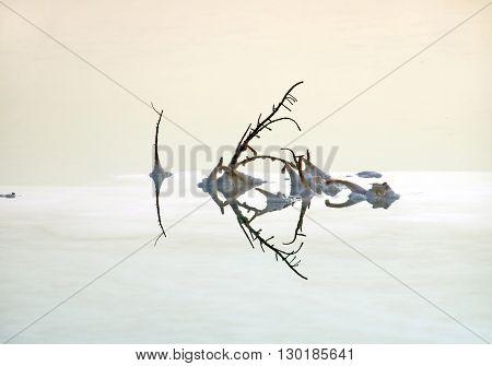 Bizarre shape of bush reflected in a salt solution