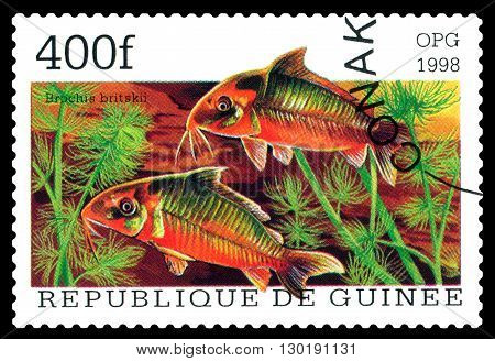 STAVROPOL RUSSIA - APRIL 30 2016: a stamp printed in Republique de Guinee show the fishes Brochis britskii series circa 1998