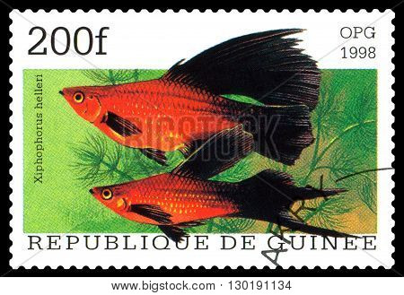 STAVROPOL RUSSIA - APRIL 30 2016: a stamp printed in Republique de Guinee show the fishes Xiphophorus helleri series circa 1998