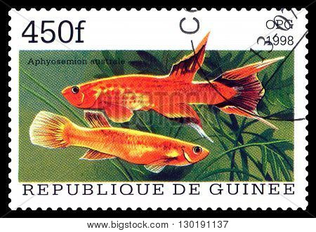 STAVROPOL RUSSIA - APRIL 30 2016: a stamp printed in Republique de Guinee show the fishes Aphyosemion australe series circa 1998