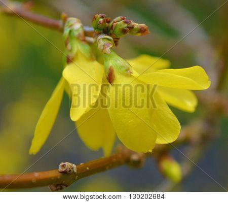 Gorgeous yellow flower in my beautiful garden