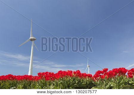 vibrant red tulips and wind turbine against blue sky in noordoostpolder part of holland