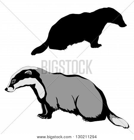 animal badger black silhouette realistic vector illustration