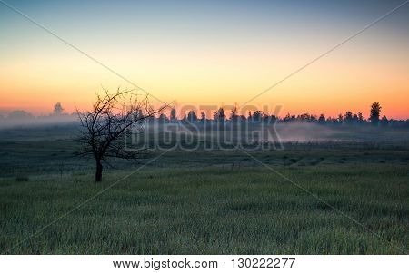 morning before dawn in abandoned and derelict plots people stands a lonely tree in a fog and the cool and thinks of a beautiful valley susambil