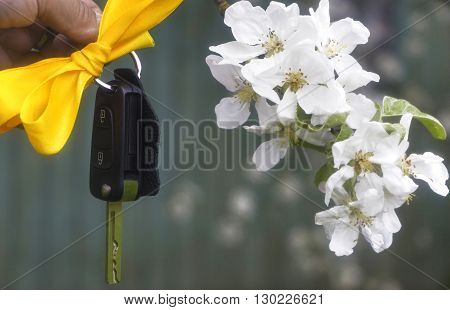 Ignition keys on a yellow ribbon next to the awakening of blossoming apple tree branches as harmony and the success of the revival