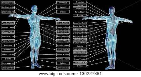 3D illustration of a concept or conceptual 3D human man anatomy and muscle text isolated on black background