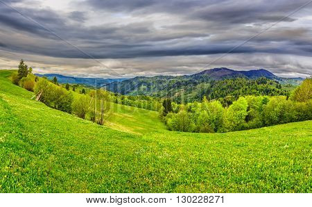 Rural Meadow With Trees In Mountains
