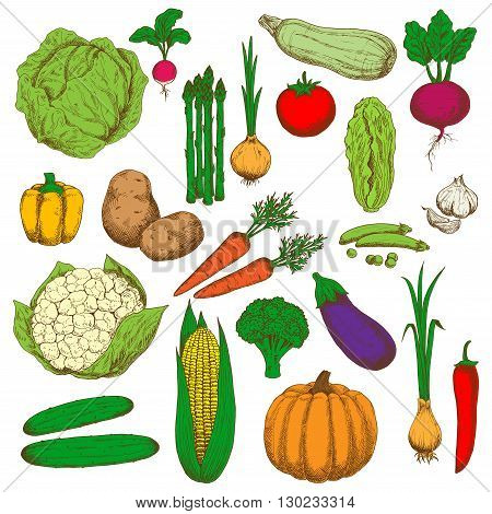 Farm fresh green cabbages and broccoli, peas and zucchini, sweet orange bell pepper and carrots, pumpkin and corn, spicy garlic, onions and cayenne pepper, crunchy cucumbers and cauliflower, asparagus and radish, ripe potatoes and tomato, eggplant and bee