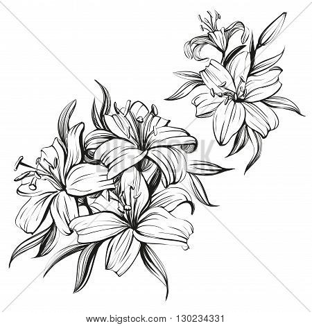floral blooming lilies set hand drawn vector illustration  sketch