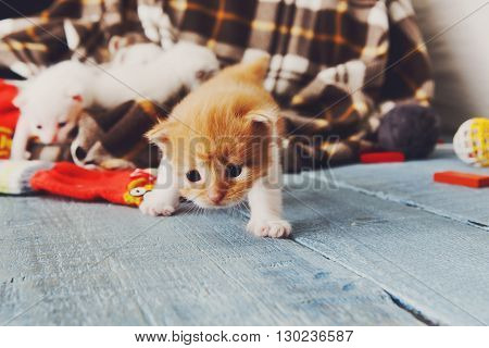 Kitten and mittens. Red orange newborn kitten near a plaid blanket. Sweet adorable tiny kitten on a serenity blue wood background plays with mitten. Funny kitten crawling and meowing