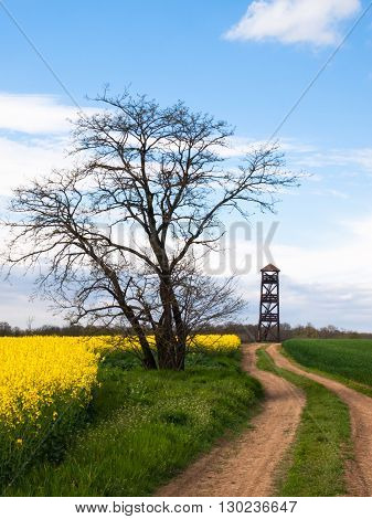Dirt road to the lookout tower in rural landscape