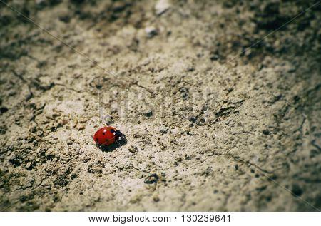 Photo of Single Red Ladybug at Ground