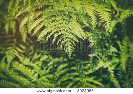 Photo of Photo of the Green Fern Background