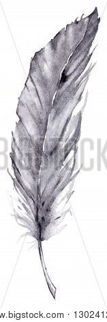Watercolor single gray grey blue feather isolated.