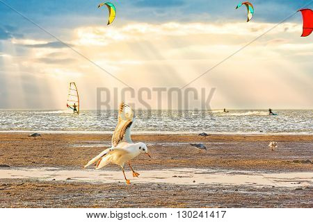 Picturesque sunset on the sea shore with a seagull in the foreground
