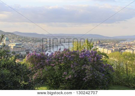 Hungary blooming lilac bushes and view from Gellert hill on the Budapest city in spring