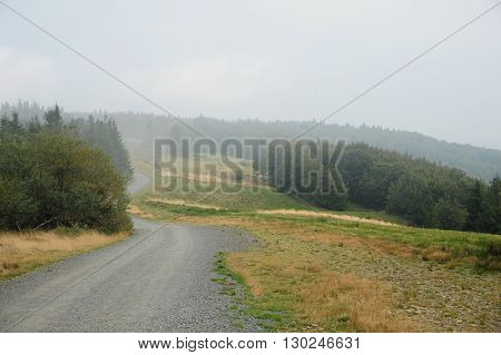 Misty road in mysterious green forest in the rain