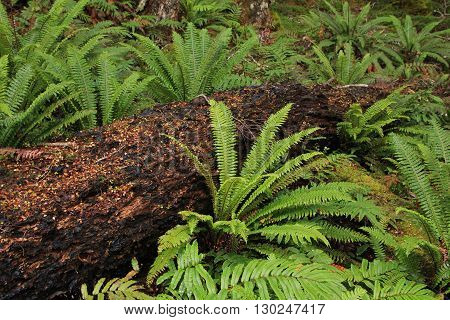 Typical flora in New Zealand. Ferns and tree trunk.