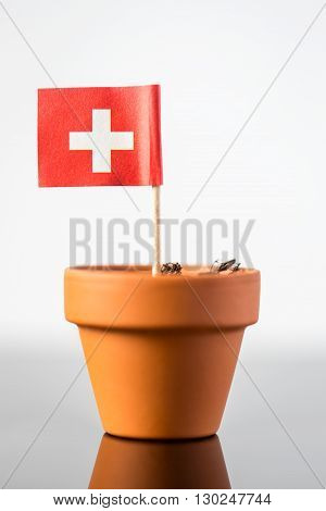 Plant Pot With Swiss Flag