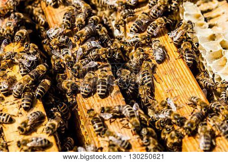 Bees On Honeycomb In A Beehive