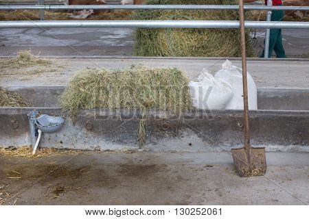 Cow's Feed In Concrete Manger In Stable